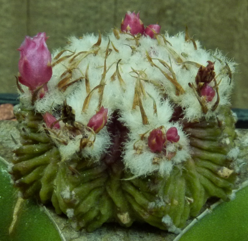 Rotten Cactus!!!! AHHHHH!!!! P1020539