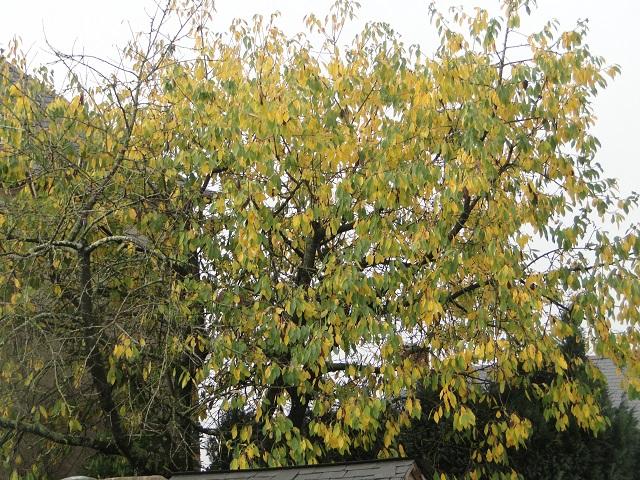 couleur d'automne  00112