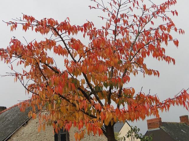 couleur d'automne  00214
