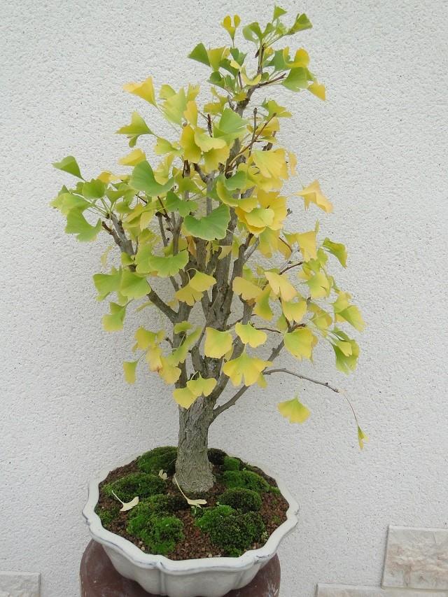 L'arbre au 40ecus 01310