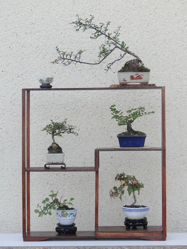 la passion du bonsai - Page 3 01410