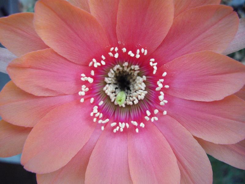 Sascha`s Blüten von 2013 - Seite 10 224
