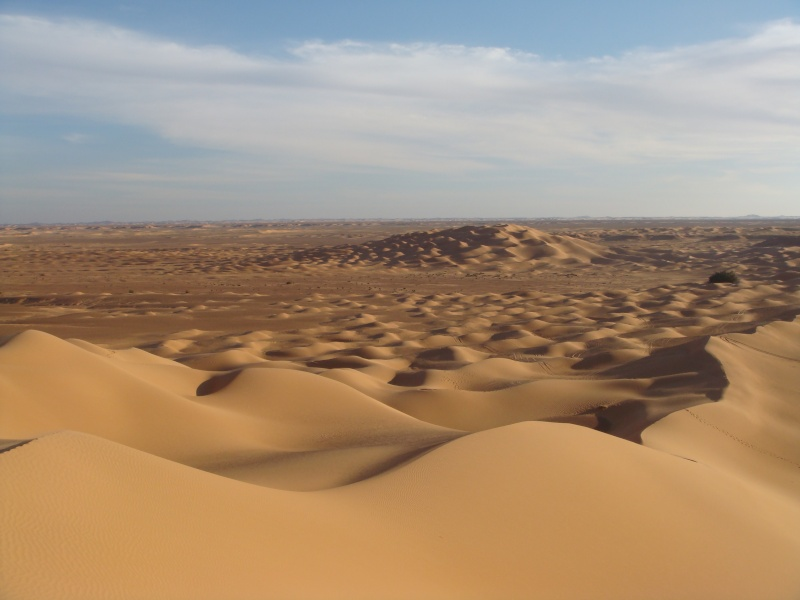 J'adore l'Afrique et ses déserts je souhaite beaucoup apprendre de vous. - Page 2 Dsc01411