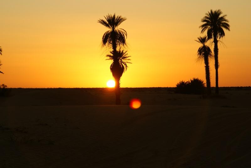 J'adore l'Afrique et ses déserts je souhaite beaucoup apprendre de vous. Dsc01810