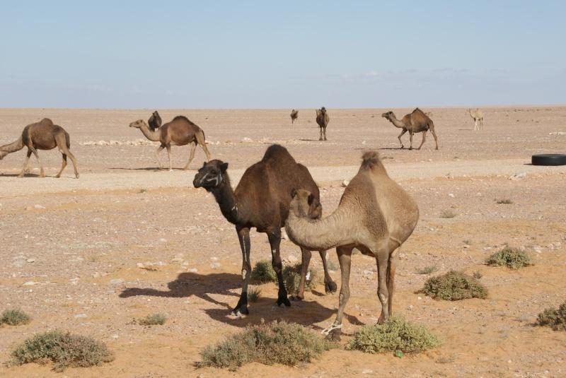 J'adore l'Afrique et ses déserts je souhaite beaucoup apprendre de vous. Dsc01811