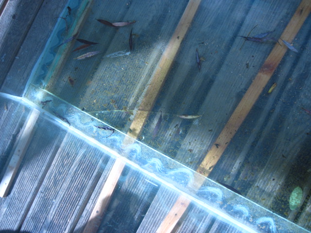 réparation vitre de fond félée 600 litres Img_0312