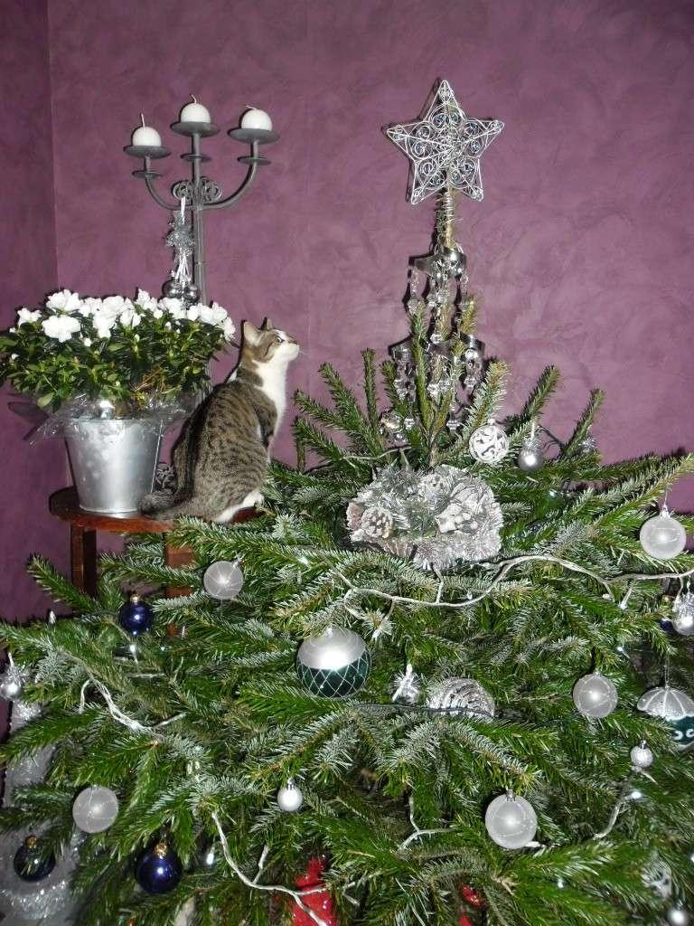 Hermione vous souhaite un Joyeux Noël Sam_1810
