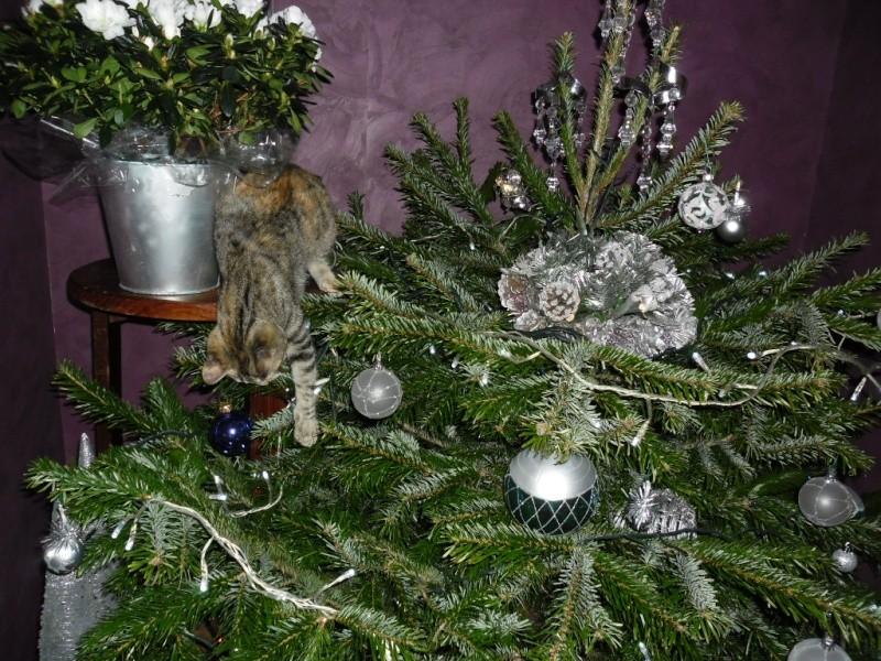 Hermione vous souhaite un Joyeux Noël Sam_1815