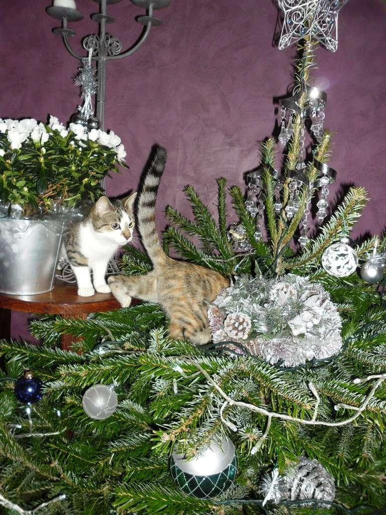 Hermione vous souhaite un Joyeux Noël Sam_1821