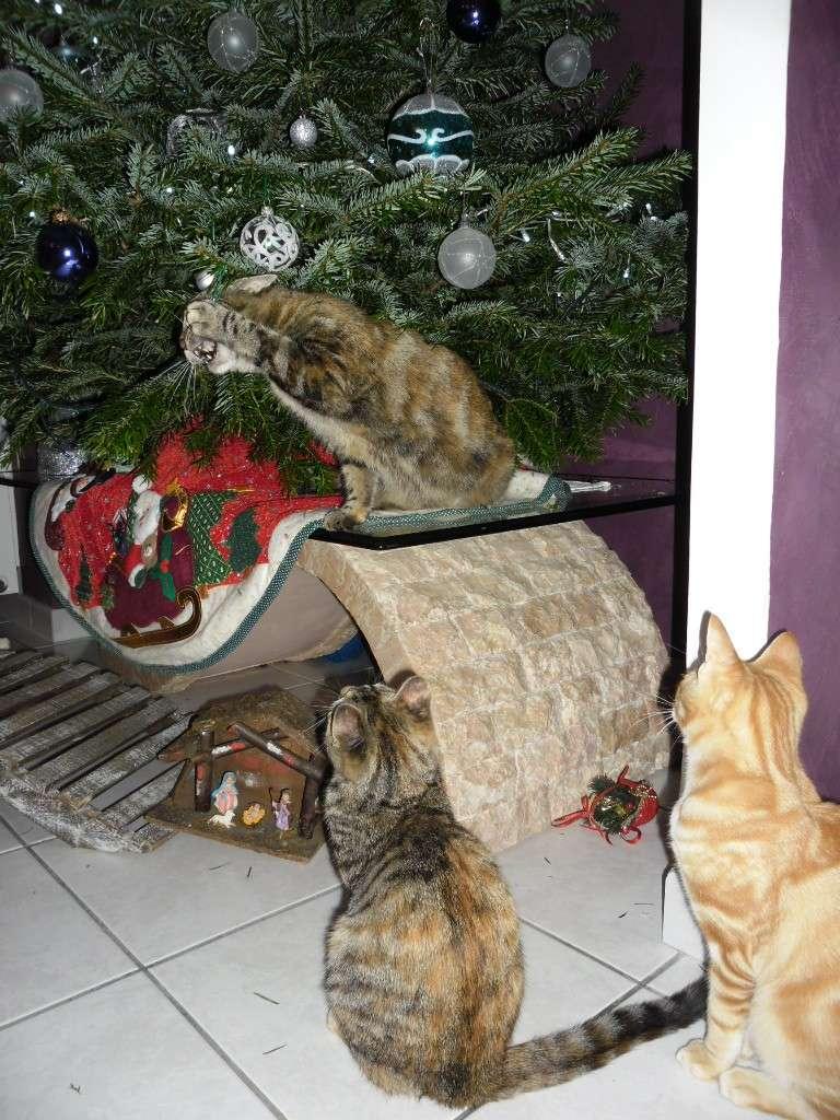 Hermione vous souhaite un Joyeux Noël Sam_1822