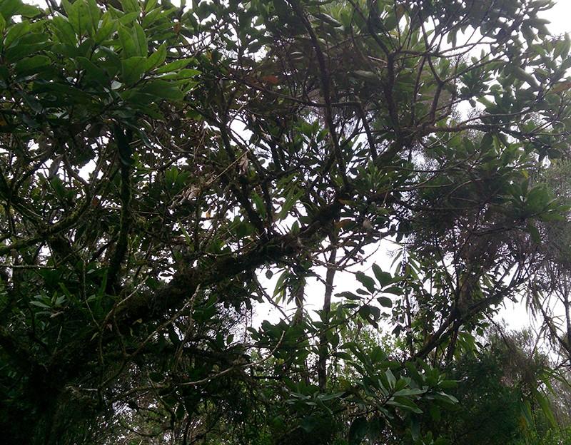 Angraecum microphyton ... ou tenellum ( ? ) Angrae19