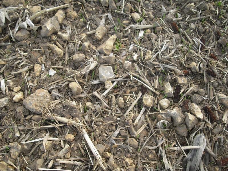 semis de blé 2013-2014 - Page 19 Cimg4427