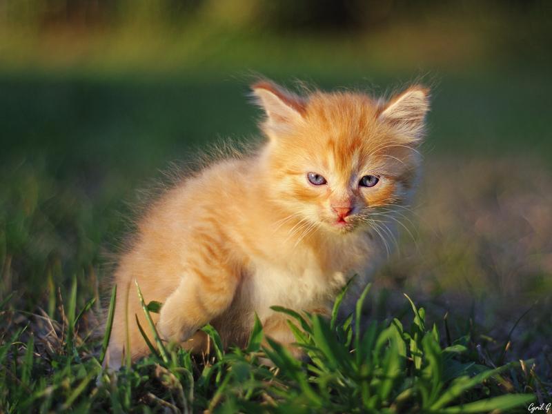 Kitten 2 Imgp3411