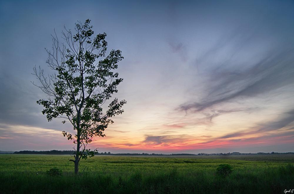 Soirée sur les champs de blés Imgp4911