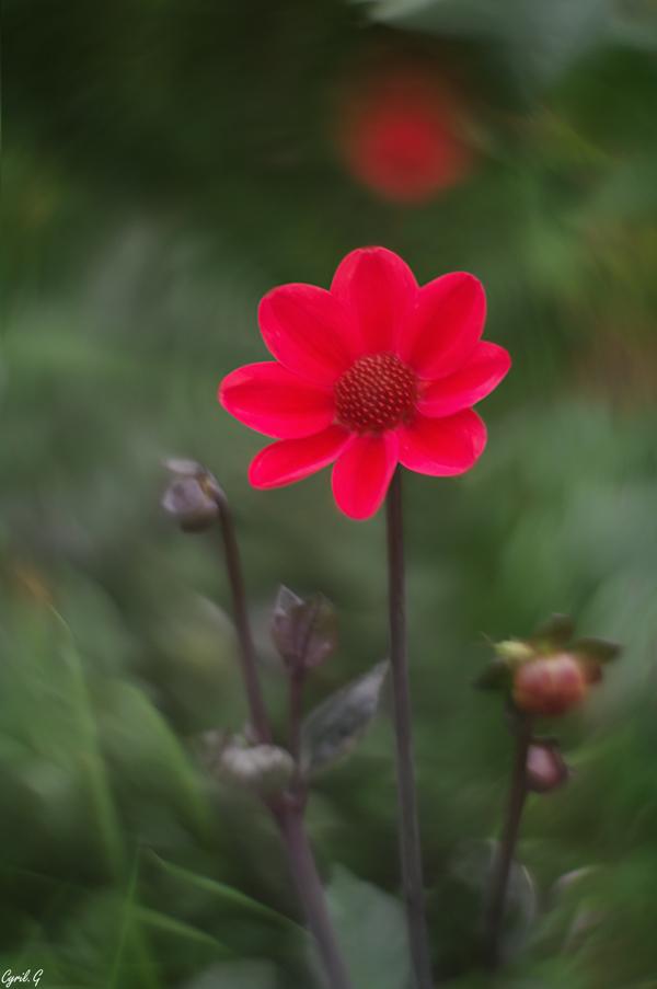 Série florale Imgp7912