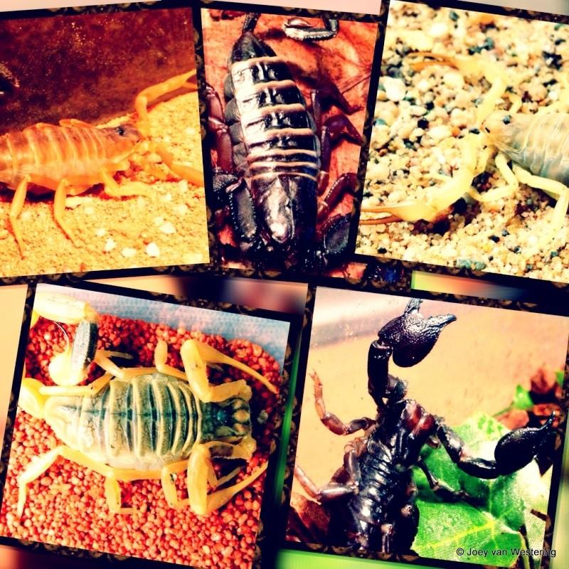 Scorpion creativity!  Waterm10