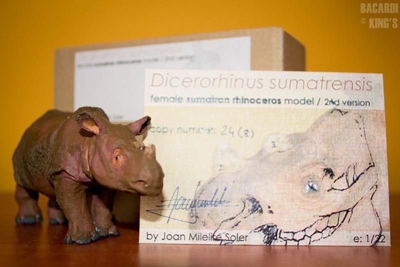 Wonderful Sumatran Rhino(by Joan Milelire), Suraja arrived. Dsc_0010