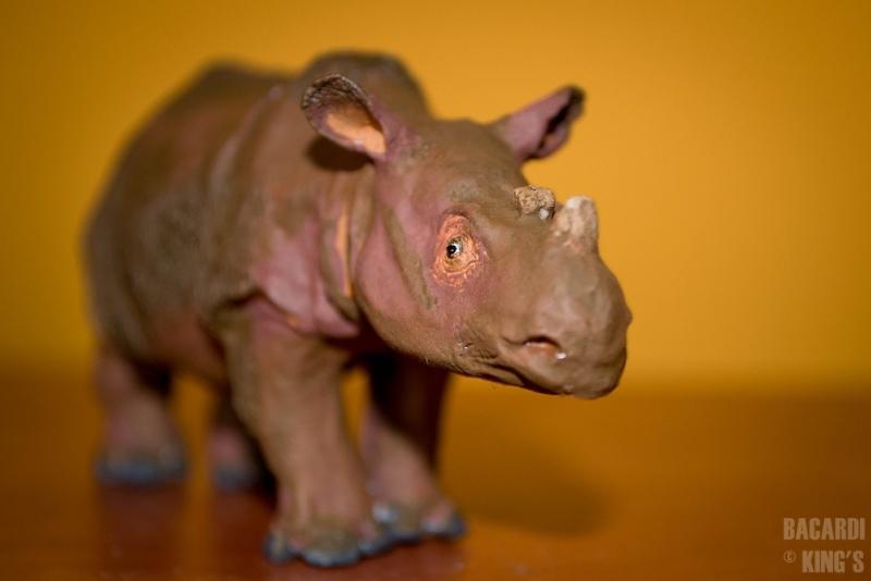 Wonderful Sumatran Rhino(by Joan Milelire), Suraja arrived. Dsc_0011