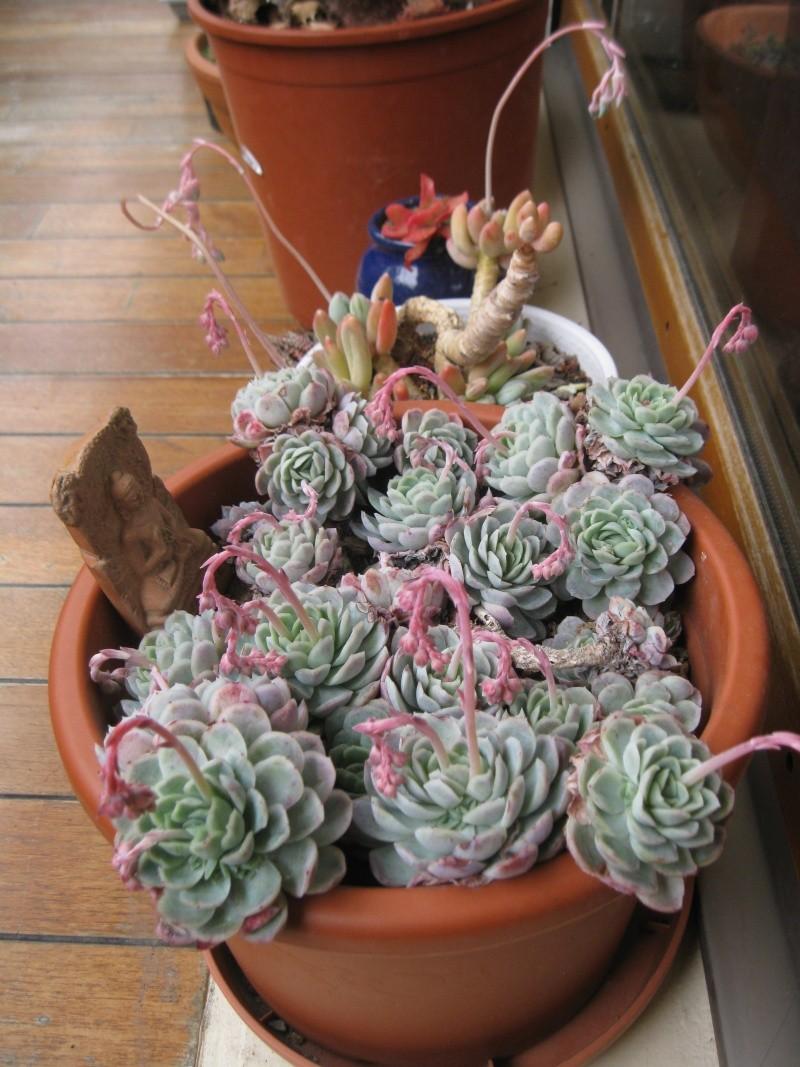 idée jardinière pour balcon? Img_0610
