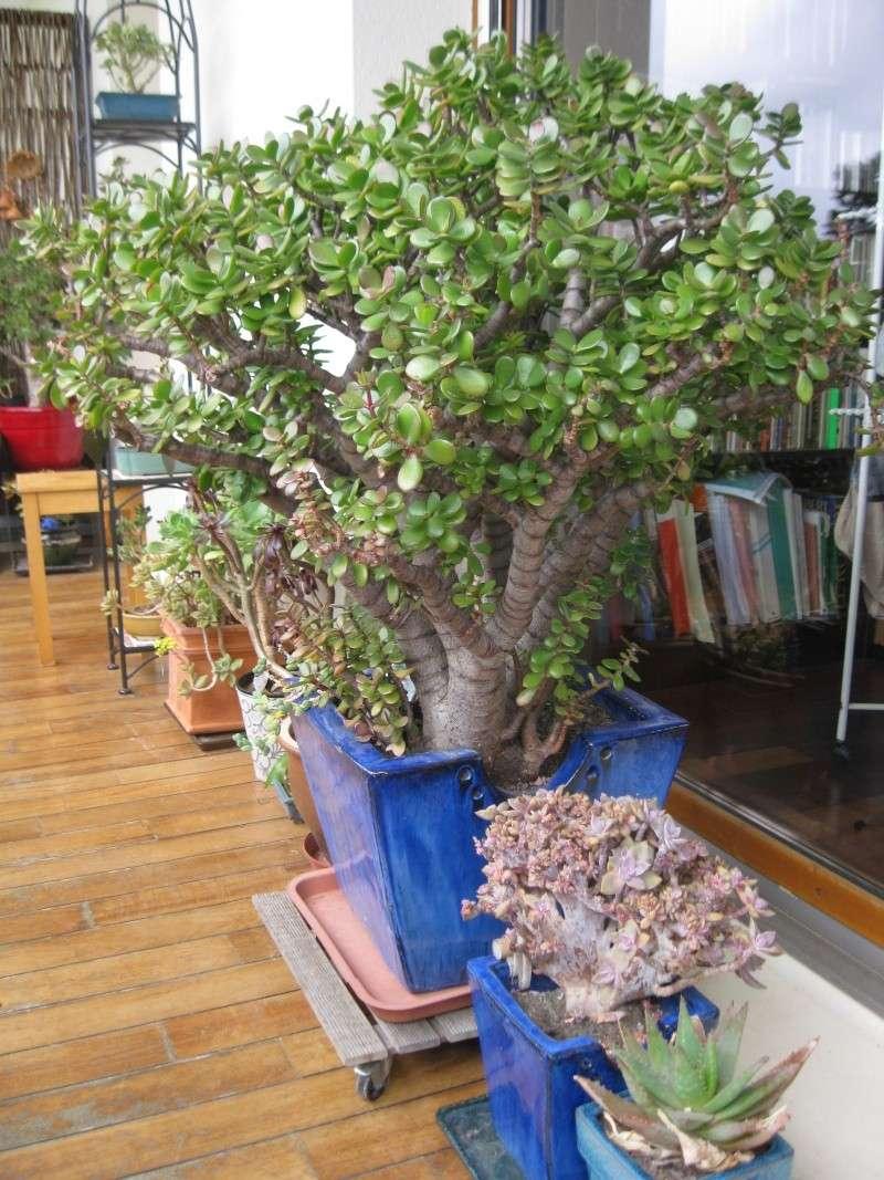 idée jardinière pour balcon? Img_0611