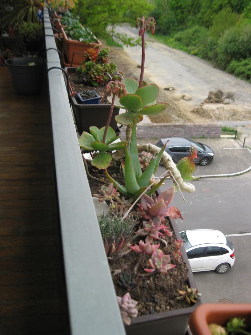 idée jardinière pour balcon? Img_0612