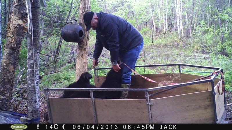 Ma saison chasse , pêche 2013 terminée ! Pict0210