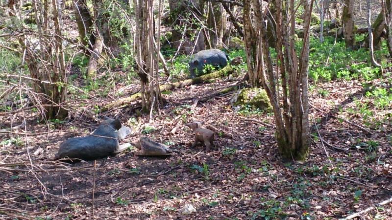 Sortie sur le parcours chasse de Belleydoux - Page 3 Dsc_0020