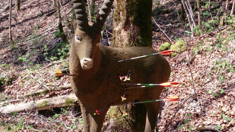 Sortie sur le parcours chasse de Belleydoux - Page 3 Dsc_0026