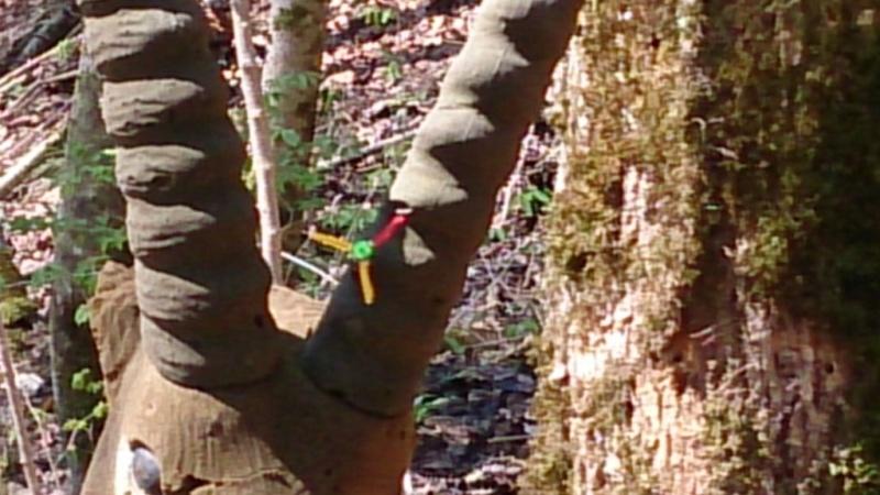 Sortie sur le parcours chasse de Belleydoux - Page 3 Dsc_0028