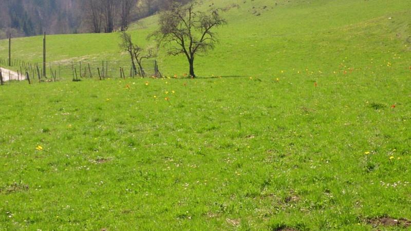 Sortie sur le parcours chasse de Belleydoux - Page 3 Dsc_0030