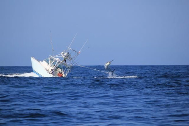 Un marlin qui coule un bateau, ça donne ça ! Marlin10