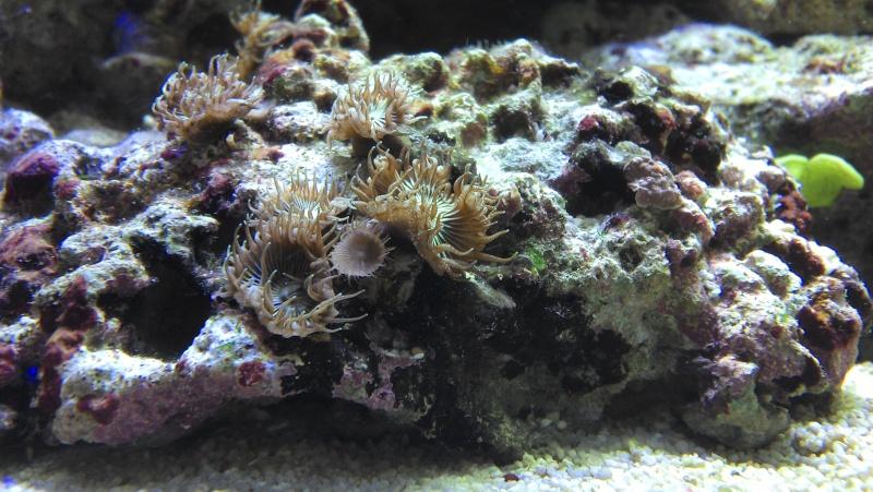 Aqua marin 120L - Page 6 Img_2025