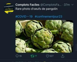 Oeufs de pangolins E2411e10