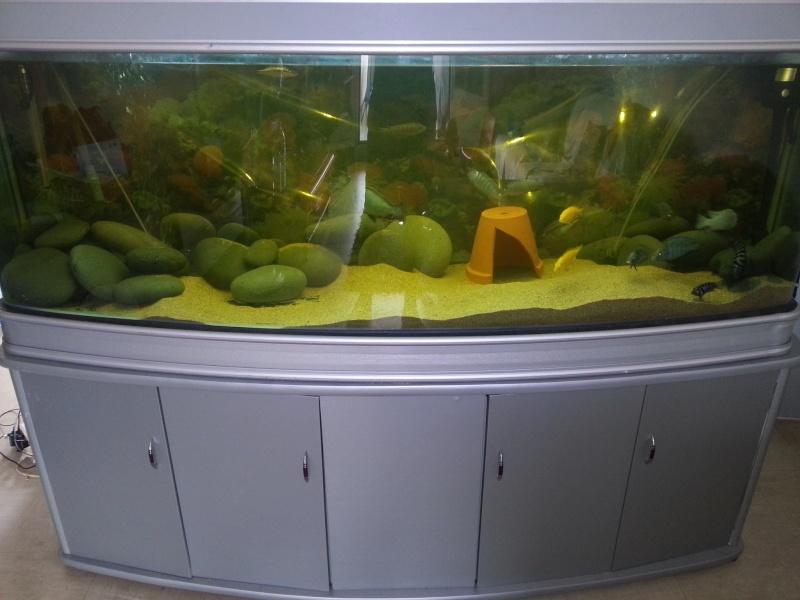 separation aquarium 20140310