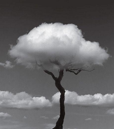 « Parfois les nuages reposent les gens d'admirer la lune » - Page 5 Arbre-11