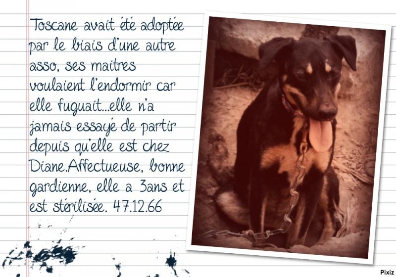 Toscane 3ans Eca57810