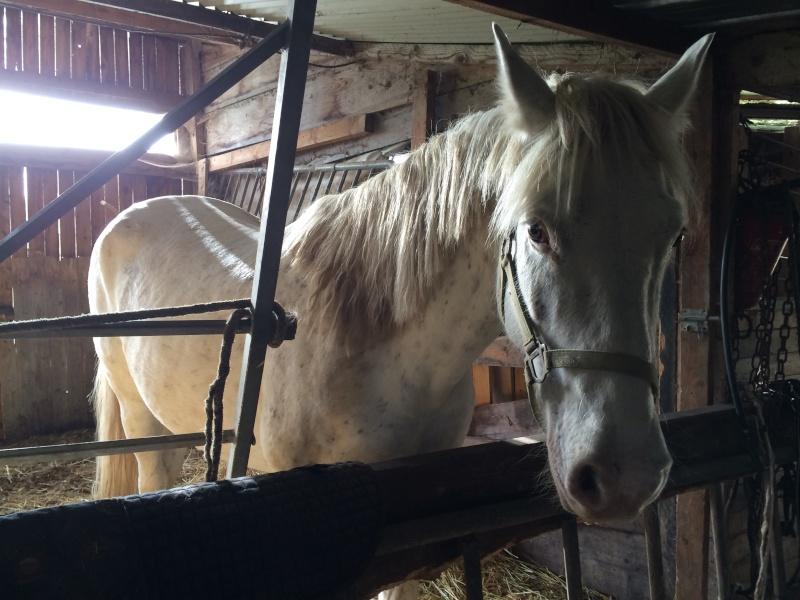 D'autres passionnés de chevaux, d'équitation ? - Page 2 Img_0111