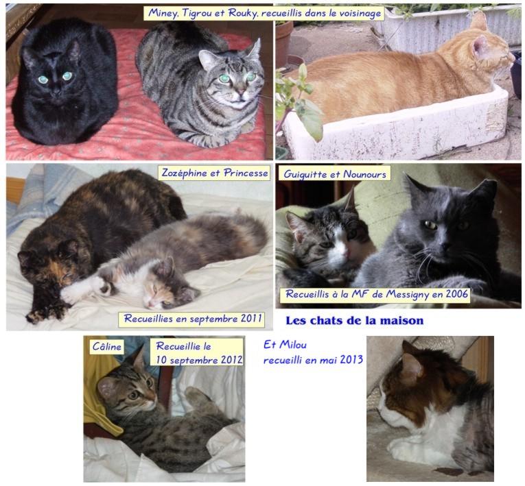 Les chats de la maison... Chats212