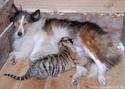 Statut juridique des animaux. 3612610