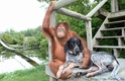 Statut juridique des animaux. 3612710