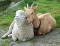 Statut juridique des animaux. 3614610