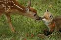 Statut juridique des animaux. 3676910