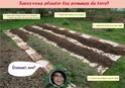 Savez-vous planter les pommes de terre? Pdt10