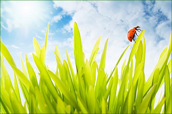 Conseils Naturo pour bien vivre le printemps Nt101_10