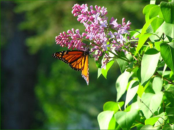 Conseils Naturo pour bien vivre le printemps Nt101_16
