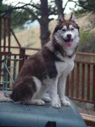 Canine Epilepsy Information Lyra10