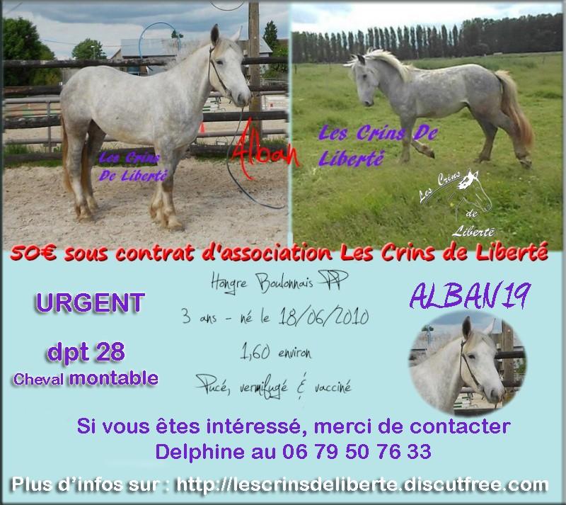 dpt28, ALBAN, Boulonnais,  adopté par Daphney89 (2014) - Page 11 Alban_10