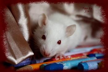 Les RatsCapables de Titia ! - Page 2 11753810