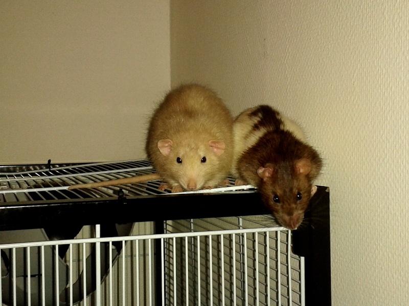 Les RatsCapables de Titia ! - Page 4 2013-123