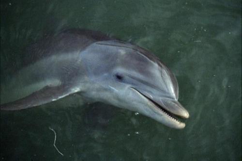 Flipper le dauphin [1964] [S.Live]  Flippe12